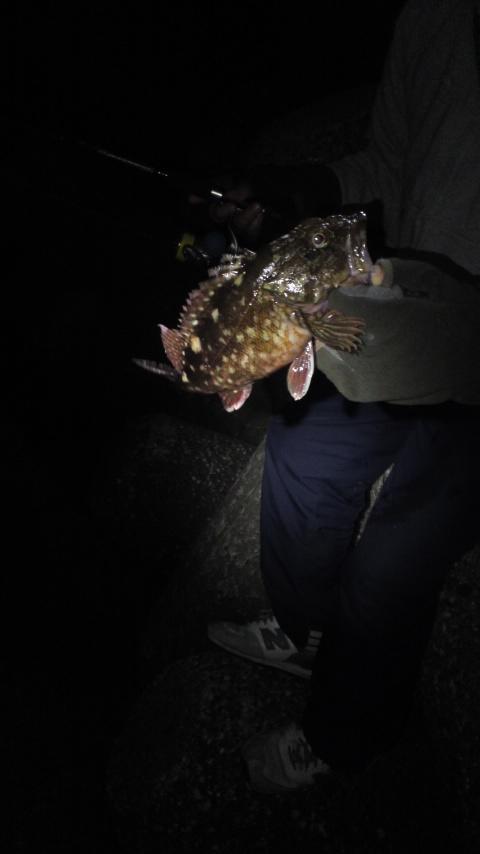 私はカサゴで釣り納め。